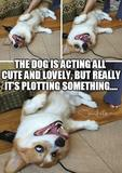 Cute dog plotting memes